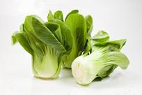 白背景上的绿色蔬菜上海青