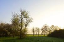 德国法兰克福郊外清晨的树林