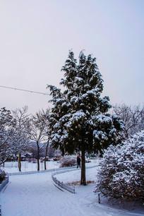 一棵松树与园林小路雪景