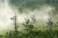 大兴安岭茂密林海晨雾升腾
