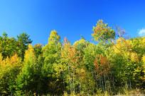 大兴安岭秋季彩林