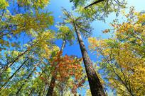 大兴安岭秋季色彩斑斓的五彩林