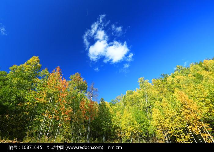 大兴安岭秋季森林风光图片