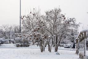 挂着雪花的小树丛林与雪地