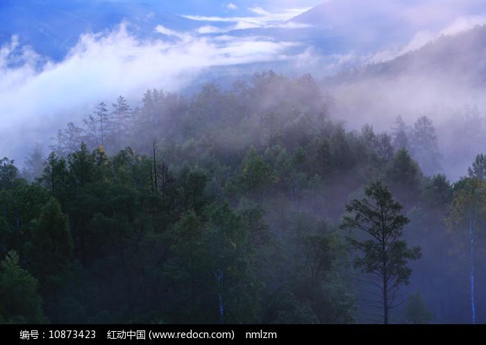 大兴安岭林区茂密林海云雾 图片