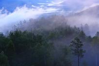 大兴安岭林区茂密林海云雾
