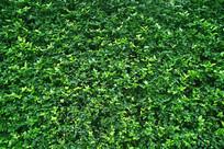 一片绿植墙