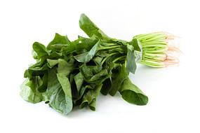 白背景上一把绿色的菠菜