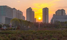 日落信阳百花园