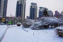 树丛人行路雪景与高层建筑群