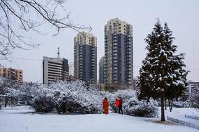 树丛松树雪景与高层住宅建筑