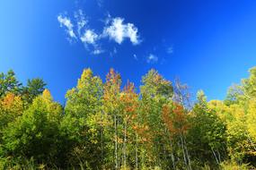 大兴安岭秋季森林