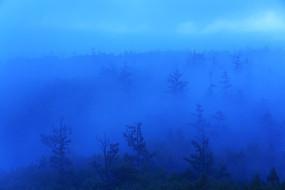 大兴安岭森林蓝雾