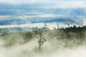 大兴安岭原始森林云海