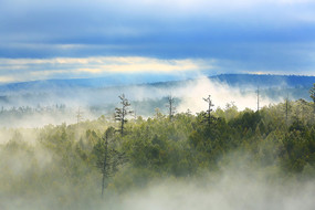 茂密林海云雾