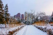人行路松树林雪景与高层建筑群