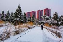 人行路松树林与高层建筑群雪景