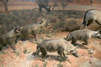 野生动物标本-棕鬣狗
