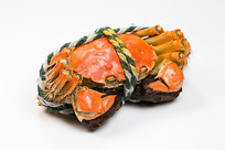 一只蒸熟的阳澄湖大闸蟹