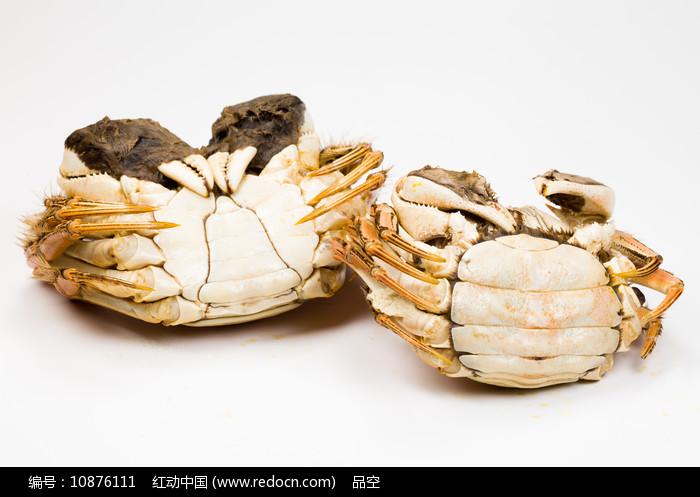 蒸熟的阳澄湖大闸蟹公蟹和母蟹图片