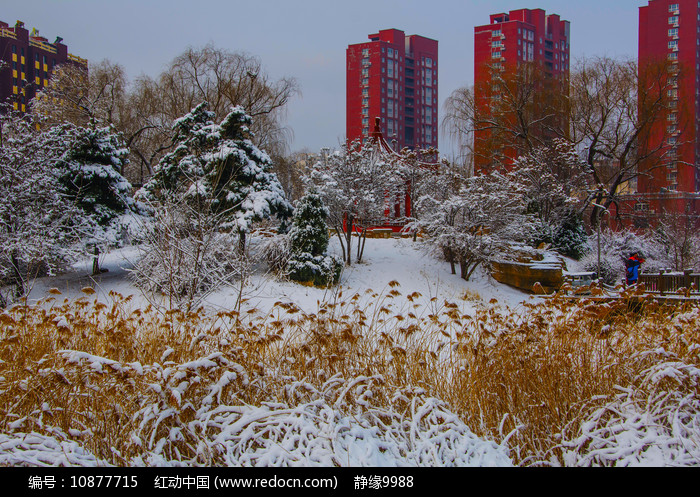 住宅建筑群与凉亭松树草地雪景图片