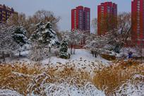 住宅建筑群与凉亭松树草地雪景