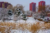 住宅建筑群与凉亭松树树木雪景