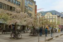 德国法兰克福春天开花的街道