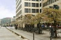 德国法兰克福-开满春花的街道