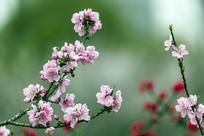 两枝桃花树枝