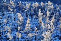 大兴安岭冬季密林雾凇