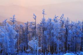 大兴安岭冬季雪林暮色