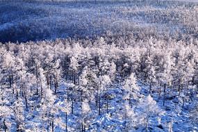 大兴安岭冬季原始森林雾凇