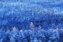 大兴安岭冬季原始森林雾凇夕照