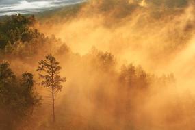 大兴安岭原始森林彩雾