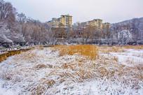 多层住宅群与雪覆盖的草地树林