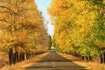 金秋树林公路