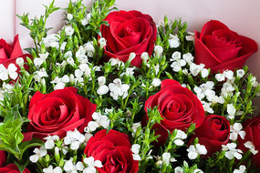 玫瑰花与满天星的插花