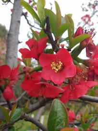 早晨春天的花