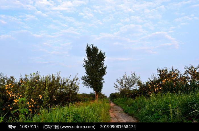 早晨的农村田园图片