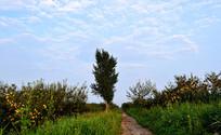 早晨的农村田园