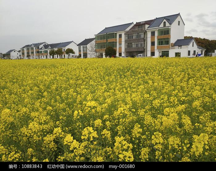 花海乡村图图片