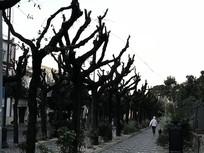 庞贝古城街景