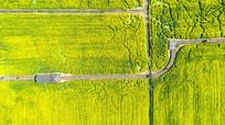俯瞰油菜田园