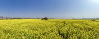 鸟瞰盛开的油菜花海大图