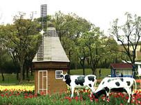 荷兰郁金香和奶牛景观