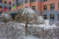 一棵挂着雪的树与教学楼建筑