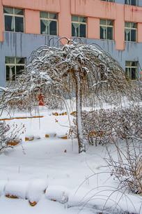 一棵挂着雪的树与学校建筑雪景