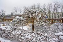 一棵挂着雪挂的树与花园树丛林