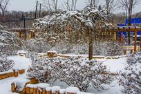 一棵披着雪挂的树与花园树丛